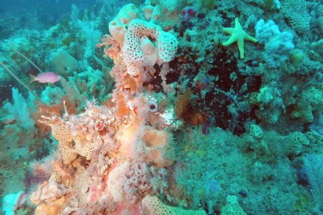 reef wilsons.jpg
